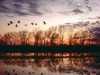 Стая улетающих птиц