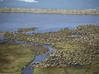 Заселенные берега