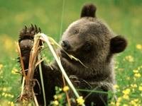 Медвежонок и корешок