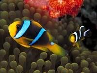 Рыбки над водорослями