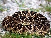 Змея свернулась клубочком