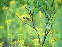 Маленькая птичка на кусте