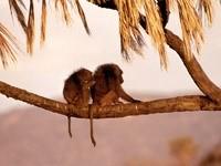 Мартышки на ветке пальмы