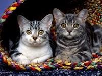 Двое котят в плетёной корзине