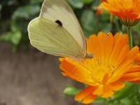 Мотылёк на цветке