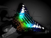 Переливающаяся бабочка