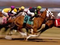 Скачки лошадей
