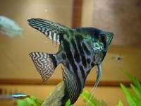 Рыбка в аквариуме