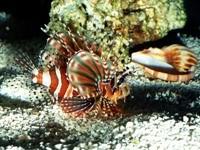 Необычная рыбка на дне