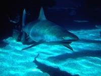 Акула на дне моря