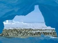 Стаи пингвинов в ледниках