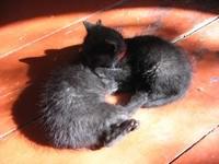 Двое котят на досках