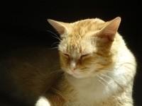 Сон рыжего кота