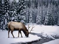 Олень в зимнем лесу