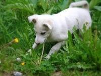 Щенок играется в траве