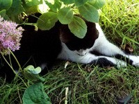 Кошка лежит в траве под ветками