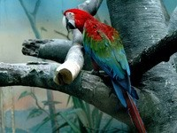 Попугай ара на дереве