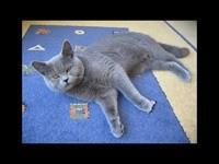 Кот лежит на коврике