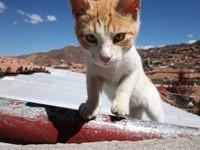 Котенок лазает по крыше