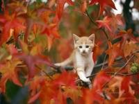 Котенок на дереве, осенью