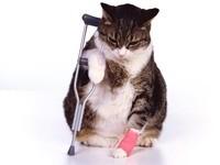 Кот с костылем и забинтованной лапкой