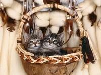 Два котенка в корзине