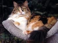 Кот на своем месте