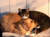 Двое котов дремлют на коврике