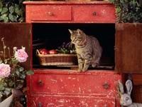 Кот в шкафу с корзиной фруктов