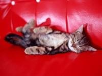 Котенок спит на красном диване