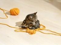 Котенок и клубок желтых ниток
