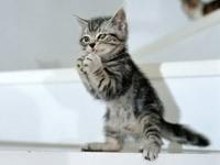 Серый котенок играется с нитью