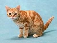 Рыжий кот на небесном паласе