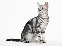 Серый кот смотрит в сторону