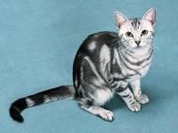 Серо – белый кот