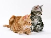 Двое котят - наблюдают