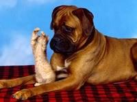 Котенок на задних лапах у собаки