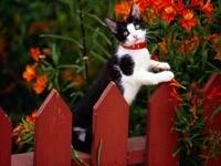 Котенок на красном заборе