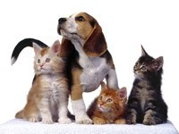 Трое котят и собака