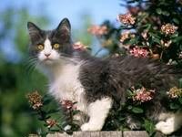 Котенок на заборе возле цветущего  куста