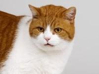Рыже-белый котик