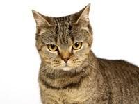 Серьезный взгляд котика