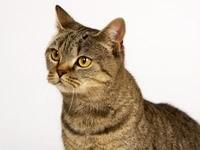 Удивленная морда кота