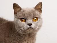 Котик смотрит внимательно