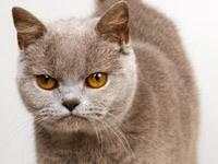 Злой и сердитый котик