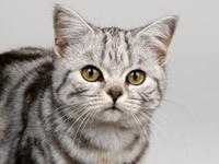 Мордочка внимательного котика
