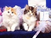 Два котенка в подарках