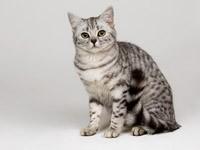 Серый кот в ожидании