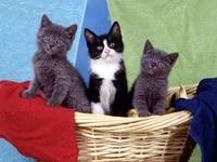 Трое котят в плетеной корзине