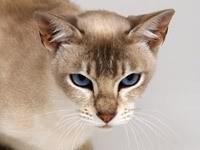 Злой взляд кошки